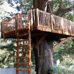 Tree House Pressure Washing